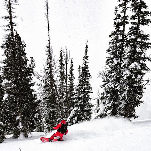 #A7Renegade @kyehalpin gets amongst it at @jacksonhole today. Storm days are the best days, especially when you have one of our Mesh FaceShields to protect ya neck from the howling wind and snow (and tree branches). #avalon7 #staystoked www.avalon7.co