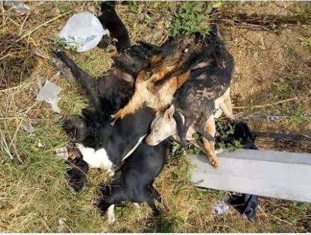 Cabe señalar que a través de las redes sociales fue denunciado el envenenamiento masivo de al menos 12 perros, hecho que se suma al registrado en principios de diciembre pasado en donde aparecieron muertos más de 20 canes