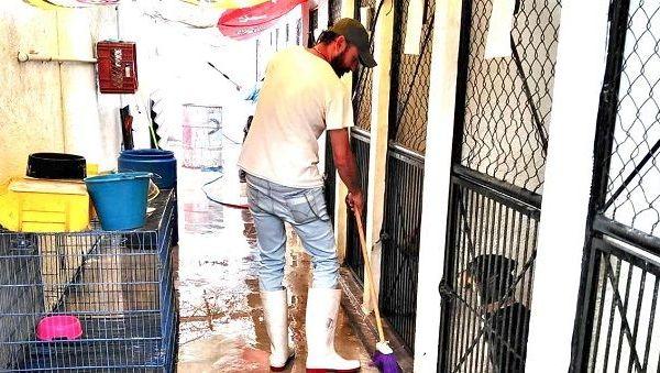 El alcalde Antonio Villalobos Adán ha instruido a todo el personal responsable del trato y manejo de los animales que rescata el ayuntamiento capitalino, para humanizar, cuidar y resguardar su integridad en condiciones de amor y respeto, pues este municipio se ha distinguido por preocuparse y ocuparse de este sensible tema que a los habitantes de la ciudad tanto preocupa, apuntó