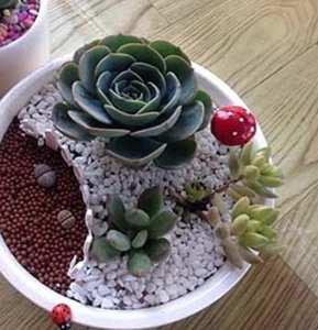 Ourbest en bois miniature Clôture de jardin Pot de fleur Plante Décoration 10x 3cm (Jaune)
