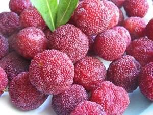 RWS 10 graines de Myrica rubra, prune peuplier, Yangmei, Bayberry, æ ?? æ ¢ ヤマム¢ ム¢, le menton. Arbousier