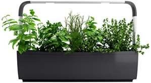 Tregren T12 Potager d'intérieur Connecté 12 Plantes, Kit prêt à Pousser Jardinière Autonome Herbes aromatiques, Petits légumes, Fleurs – Cultivez Votre Application Smartphone – Gris
