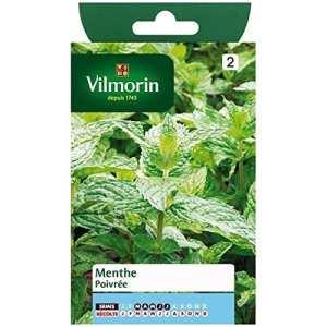 Vilmorin – Sachet graines Menthe poivrée