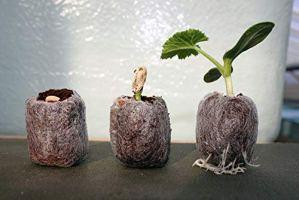 Generic Jiffy 7 24MM X 45MM Bouchon DE Bouchon/Compost PELLETS X 500