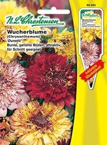 N.L. chrestensen 50032Semences de Fleurs, Jaune, 11,5x 0,5x 15,6cm