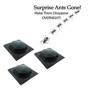 3pièges à fourmis, insectes et cloportes