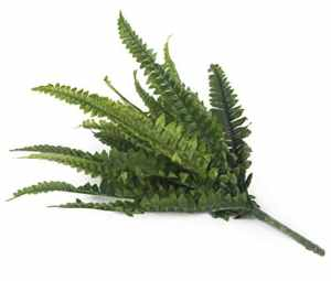 Closer To Nature C044W Nephrolepis exaltata artificielle 30 cm