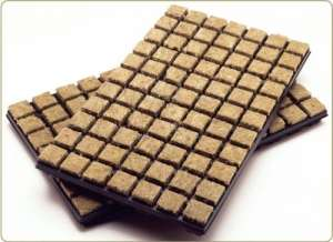 Esoteric Hydroponics Laine boutures Rockwool Graines Cubes 2,5cm X 77