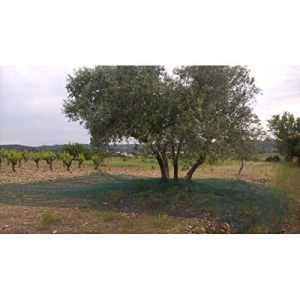 Filet de récolte LONODIS anti-UV fendu double trame 50g / m2 vert