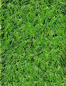 PEGANE Rouleau Gazon Artificiel d'extérieur en 100% polypropylène Coloris Vert – Dim : 2m x 25m