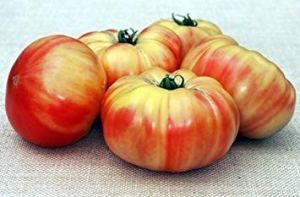 PlenTree 1000graines de Mammoth Allemand Or–Tomates bi-Color