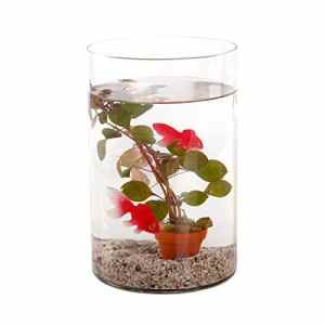 BOTANICLY | Waterworld Petite pièce d'eau avec plante aquatique et 2 poissons en plastique | Hauteur: 21 cm
