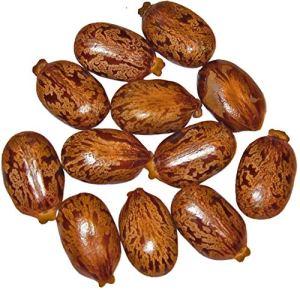 Shop Meeko 1 Kg Graines Ricinus de 'Castor Bean -Ricinus de communis-' GIBSONII'