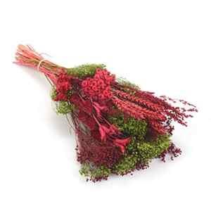 Bouquet Verticale – Sanremo fleurs séchées de la Riviera dei Fiori Italie (rouge)
