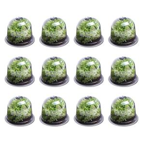 IDMarket – Cloche à salades x12 Serre de Protection pour Plants