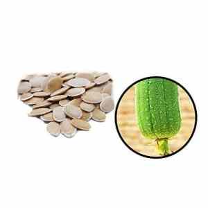 Rocita 25 graines Gourd Luffa Graines OGM Non biologiques Gourd Luffa Semences pour la Maison Heathy La Plantation de légumes
