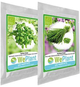 BIO Basilic & Ciboulette – Graines de plantes aromatiques/Intérieur & Extérieur