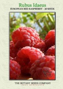 Rubus Idaeus (20) Graines – Framboisier Semences [European Red Raspberry]