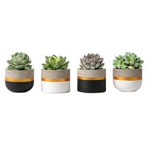 Mkouo 3 Pouces Mini Ciment Succulent Plantes Moderne Concrete Cactus Pots de Plantes Small Clay Intérieur Herb Window Box Container for Home and Office Decor, Set of 4