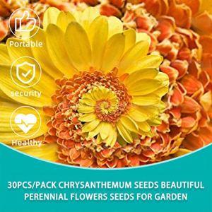 30pcs / pack Chrysanthème Mini fleur graines graines de pyréthroïde belles fleurs vivaces graines de fleurs pour le jardin de la maison de bricolage (couleur: aléatoire)