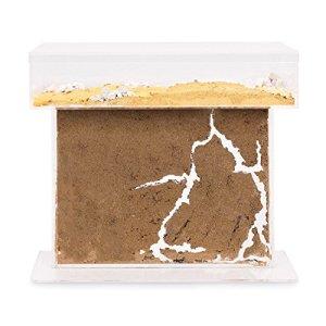 AntHouse – Fourmilière Naturelle en Sable – Kit T BIG Acrylique 25x20x1,5 cm (Fourmis Gratuites)