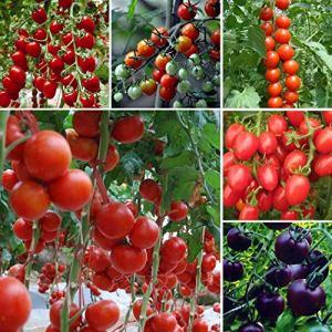 Sisaki 100 pcs/sac Multicolore Tomate Graines Maison Jardin Jardin Légumes Plante Légumes
