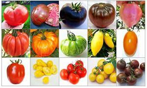 150 GRAINES deTOMATESRARE et RICHE en NUTRIMENTS COLLECTION 1 en 15 VARIETES: TOMATE GéANT ITALIENNE, CHEROKEE PURPLE, NOIRE DE CRIMEE, BRANDYWINE NOIR, COEUR ROSE, COSTOLUTO FIORENTINO, PINEAPPLE, GREEN ZEBRA, BANANA LEGS, ORANGE STRAWBERRY, ROMA, YELLOW PEAR, CERISE ROUGE, CERISE GOLD et CERISE NOIRE