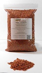Tricot moelleux traité sans grattage pour semer 1 kilo Panifiable.