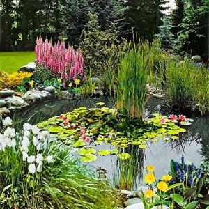 3x Plantes oxygénantes de bassin | 3 variétés de plantes aquatiques | Hauteur 30-40cm | Panier de plantation Ø 18cm inclus