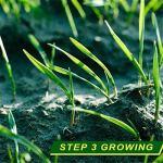 Tapis Biodégradable De Graine D'herbe, Papier D'engrais De Plantation De Pelouse De Sol Résistant Au Vent Et Solide 20 * 300Cm 2 pièces