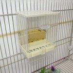 Keer123 Distributeur automatique de graines pour perruche, perruche, calopsitte, conure africaine, cacatoès, aras, inséparables, pinsons, canaris