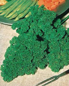 Lot de 9 : Persil Frisé vert foncé (25 g)