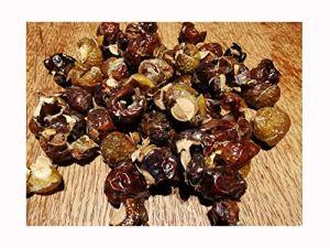 Sapindus MUKOROSSI Sapindus Sapindus MUKOROSSI, cultivez votre propre savon et boule de lavage naturelle, 20 cm de haut