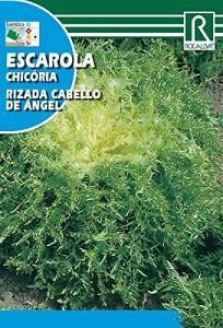 Semence escarola R.C. Angel 10ud