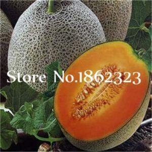 Generic Fresh 30 Pcs Graines de Cantaloup pour Planter Orange 1