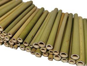 aktiongruen Hôtel à Insectes en Bambou – 70 pièces – 12 cm – avec Poudre.
