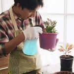 TAECOOOL Vaporisateur d'eau réutilisable de 600 ml pour plantes – Pour arroser les plantes en intérieur et en extérieur – Pour nettoyer et laver les cheveux – Vert