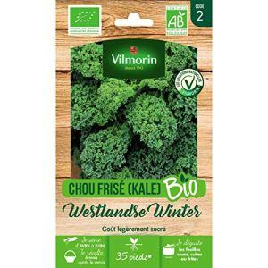 Vilmorin – Sachet graines Chou Frisé (KALE) Westlandse Winter BIO – Brassica oleracea var. sabellica