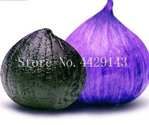 Sump Fresh 100 pcs Graines de légumes à l'ail pour la plantation Bleu noir
