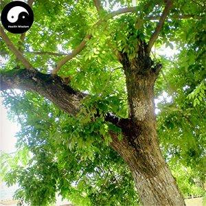 Acheter Rare parfumée Rosewood Arbre Graines 160pcs Plante Dalbergia odorifera Huang Tan
