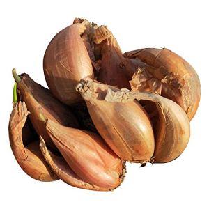 Graines d'oignon feu quatre saisons oignon feu tête rouge graines d'oignon balcon intérieur en pot 300 comprimés