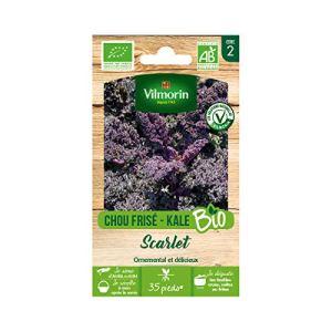 Vilmorin – Sachet de graines Chou Frisé (Kale) Rouge Scarlet BIO