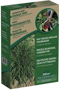 Générique Ray Grass Anglais -Engrais Vert 500 g – Plante Vivace couramment utilisée comme fouragère- Pousse vigoureuse – Se tond Facilement