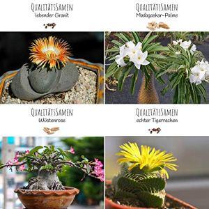 Graines de cactus exotiques à haut taux de germination – Set de graines succulentes pour votre propre cactus à fleurs (set de 4 graines)