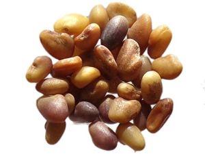 Trèfle Violet Bio Salino – 250 grammes – Trifolium Pratense – Red Clover – (Engrais Vert – Green Manure) – SEM06