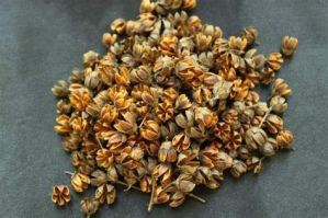 Alick 10 graines de plantes de myrte crêpe