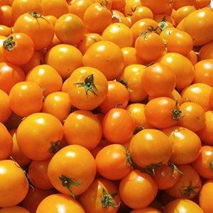 Golden Jubilee Graines de tomate – 10 graines de légumes et de jardin rares non OGM