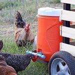 Emoshayoga Mamelon à Boire 10 pièces résistance à la Chute Automatique Tasse à Boire de Poulet volaille Tasse à Boire de l'eau Rouge pour la Ferme