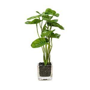 Openg Plante Grasse Plante Artificielle Interieur Décor à la Maison Plantes d'intérieur Plantes Décoratives Plantes Face Intérieure Petit Green 2