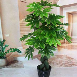 TENGGO Egrow 50Pcs/Pack Graines Fatsia Plante Ornementale Fatsia Japonica Bonsai Lant Arbuste Arbre Ba Jiao Jin Pan